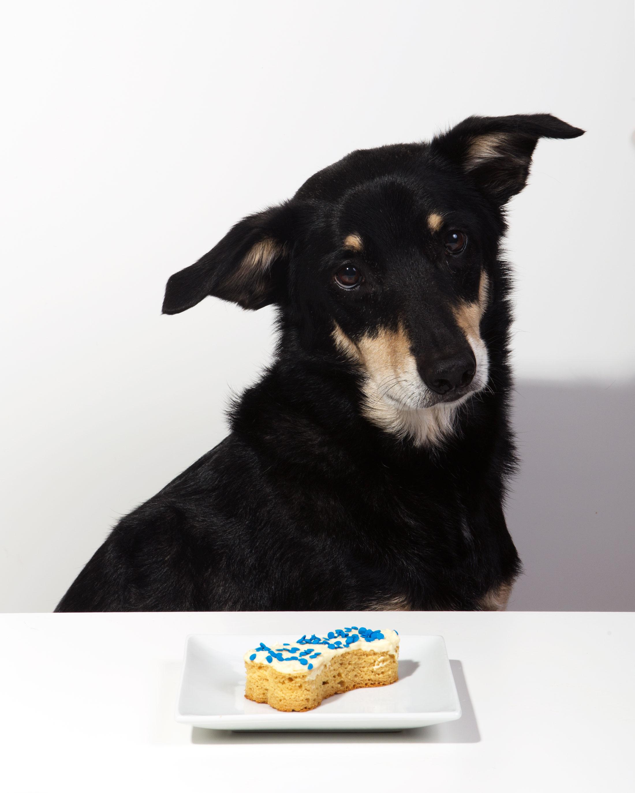 Grain-free Mango Doggie Cake